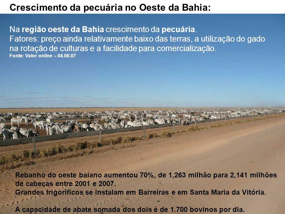 Crescimento da pecuária no Oeste da Bahia: