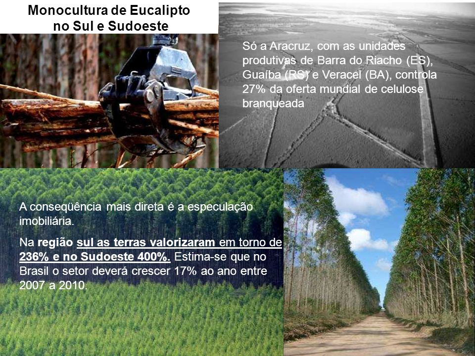 Monocultura de Eucalipto no Sul e Sudoeste