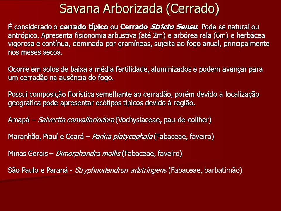 Savana Arborizada (Cerrado)