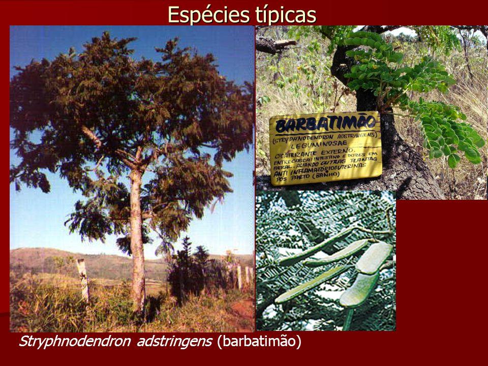 Espécies típicas Stryphnodendron adstringens (barbatimão)