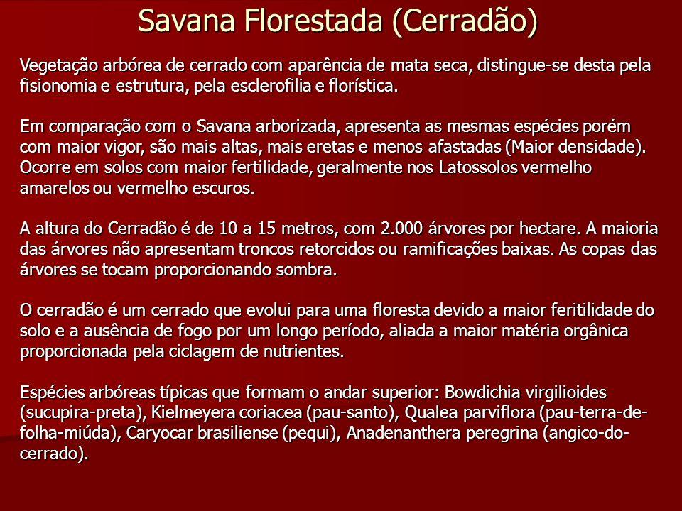 Savana Florestada (Cerradão)