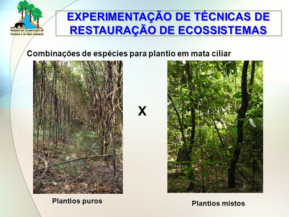 EXPERIMENTAÇÃO DE TÉCNICAS DE RESTAURAÇÃO DE ECOSSISTEMAS