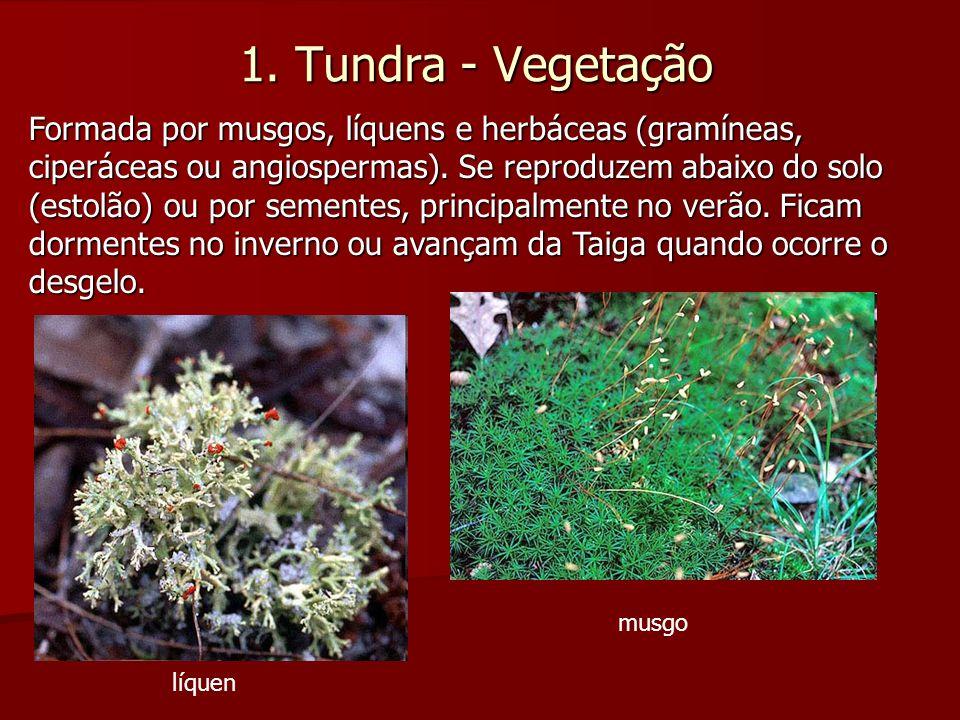 1. Tundra - Vegetação
