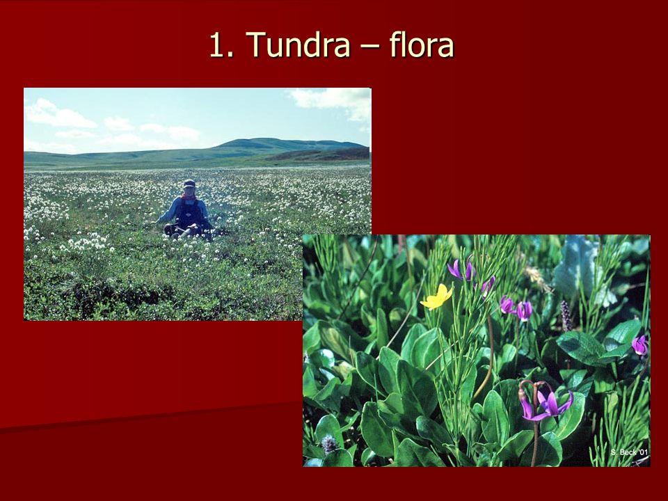 1. Tundra – flora