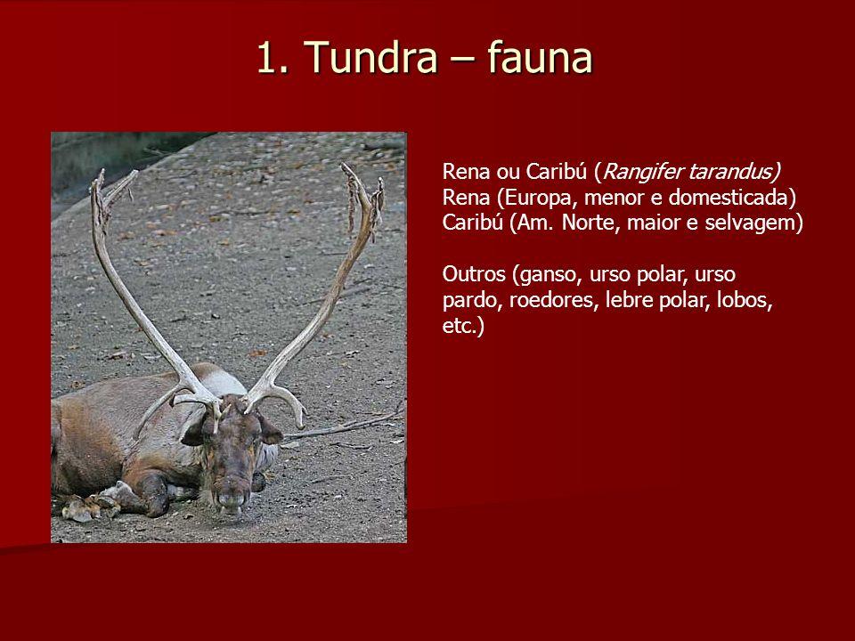 1. Tundra – fauna Rena ou Caribú (Rangifer tarandus)