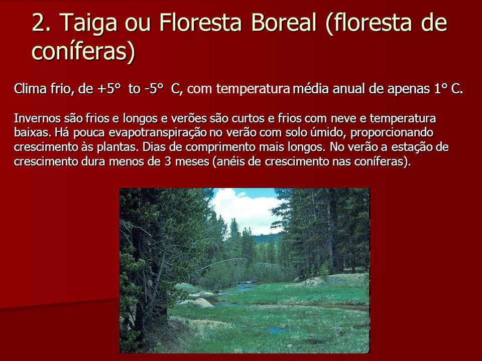 2. Taiga ou Floresta Boreal (floresta de coníferas)