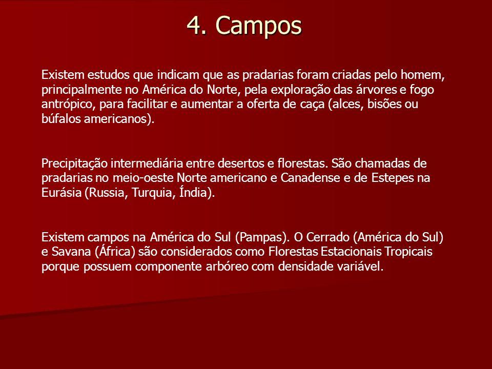 4. Campos