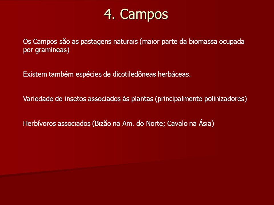 4. Campos Os Campos são as pastagens naturais (maior parte da biomassa ocupada por gramíneas) Existem também espécies de dicotiledôneas herbáceas.
