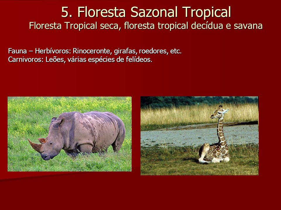 5. Floresta Sazonal Tropical Floresta Tropical seca, floresta tropical decídua e savana