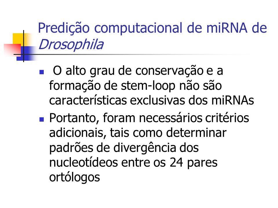 Predição computacional de miRNA de Drosophila