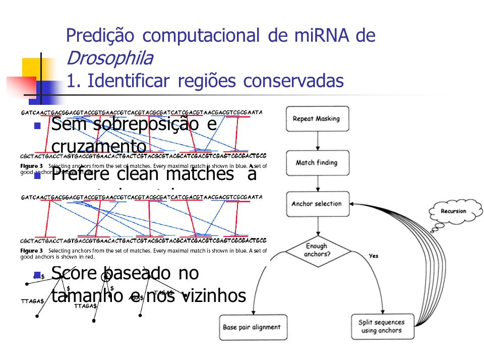 Predição computacional de miRNA de Drosophila 1