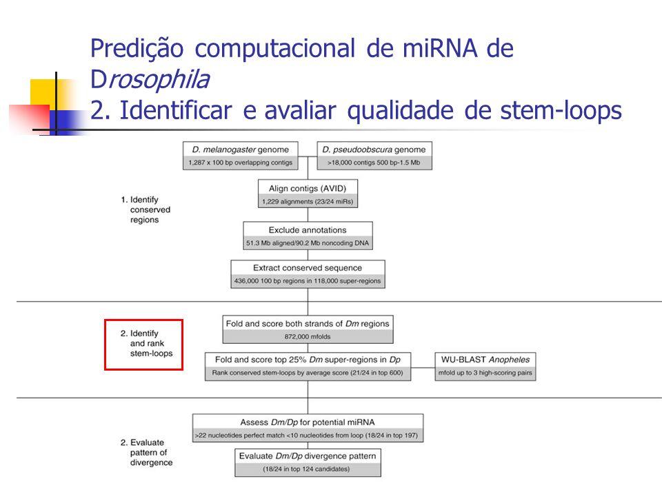 Predição computacional de miRNA de Drosophila 2