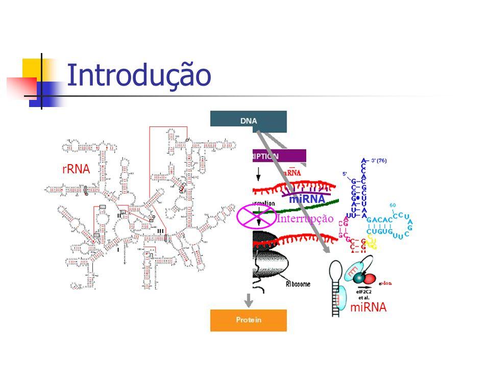 Introdução rRNA miRNA miRNA Interrupção