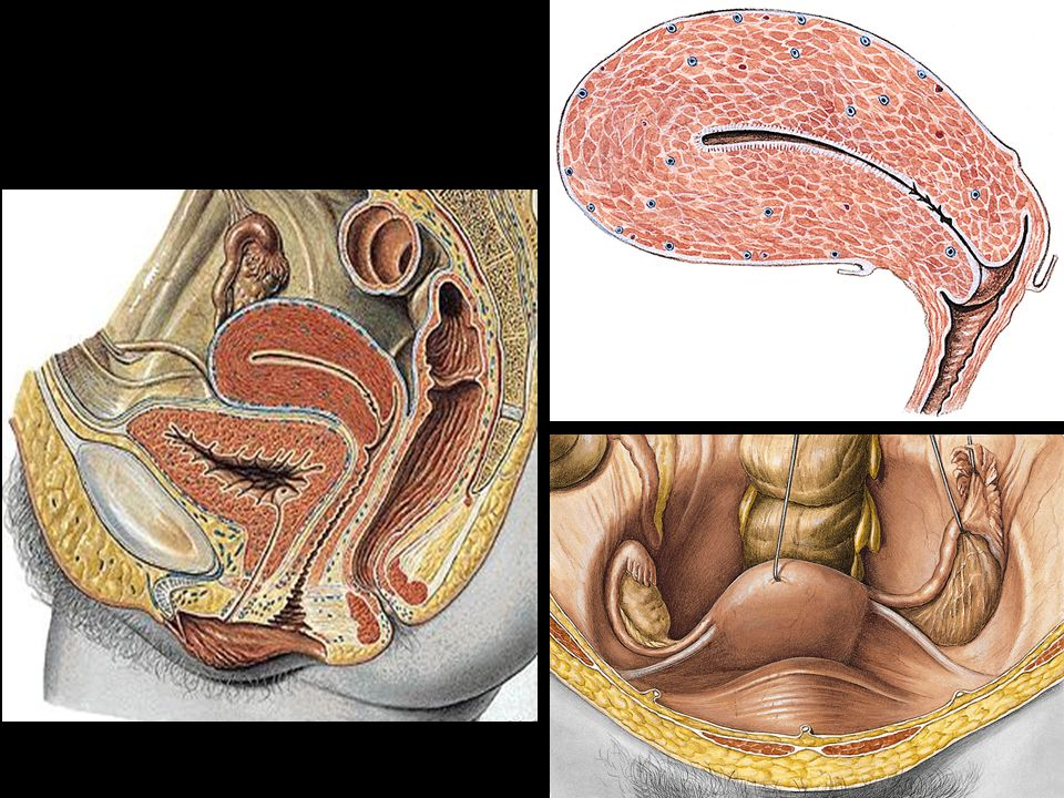 Conceito – órgão impar mediano do sexo masculino, volumoso, glandular, muscular e revestido por cápsula fibrosa. Possui a forma d uma castanha com a base superior e um ápice antero-posterior. Forma um anel ao redor da uretra, abaixo do colo vesical e acima do diafragma urogenital.