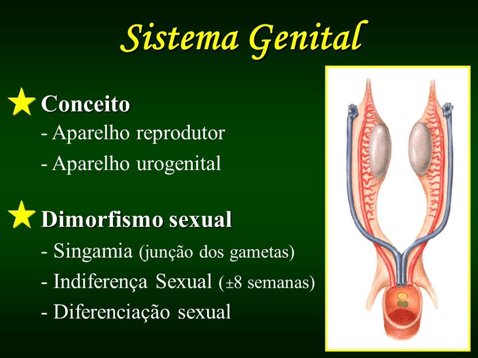 Sistema Genital Conceito Dimorfismo sexual - Aparelho reprodutor