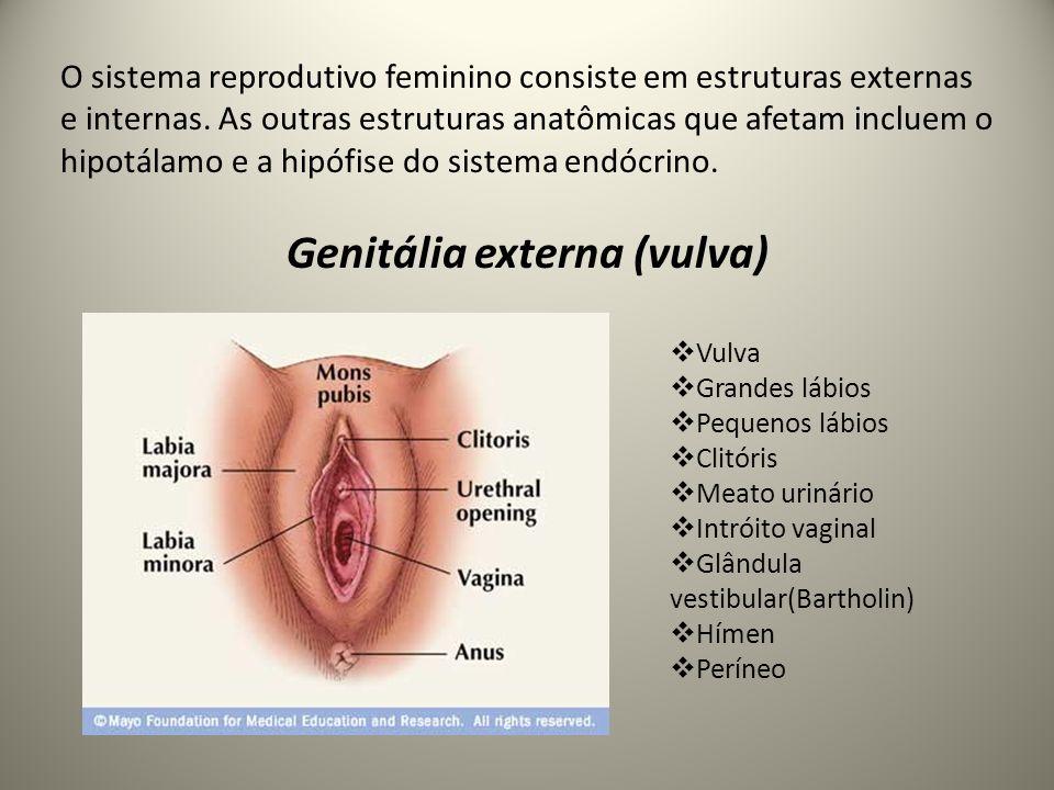 Genitália externa (vulva)