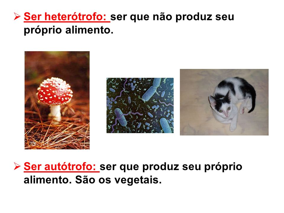 Ser heterótrofo: ser que não produz seu próprio alimento.