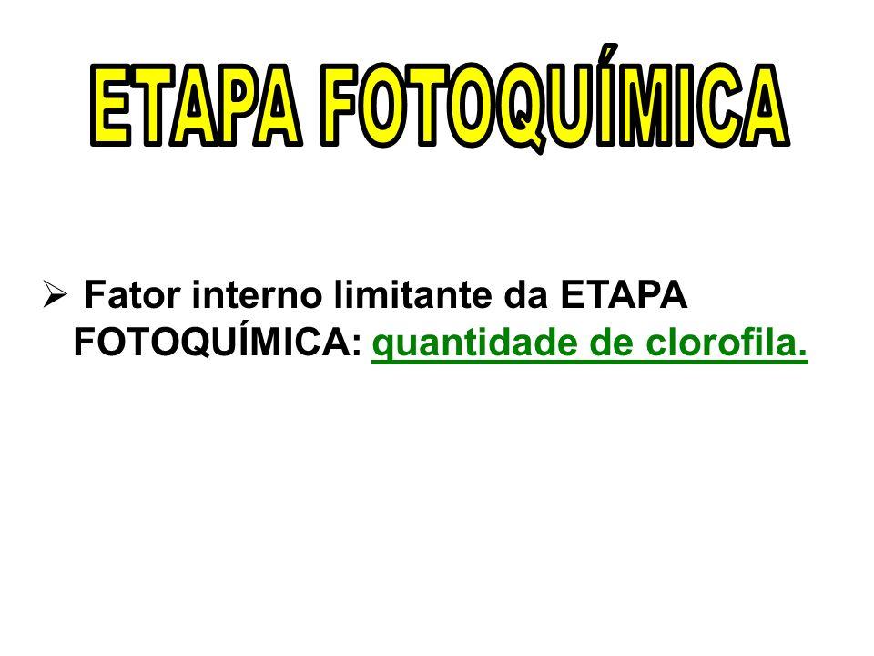 ETAPA FOTOQUÍMICA Fator interno limitante da ETAPA FOTOQUÍMICA: quantidade de clorofila.