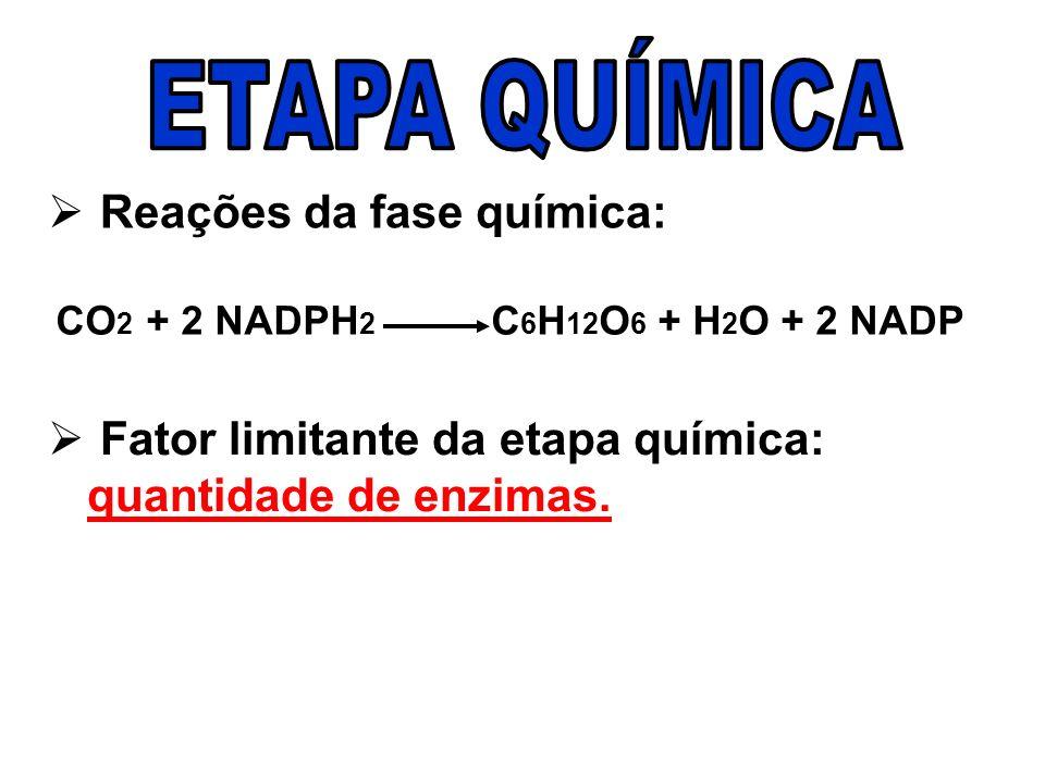 ETAPA QUÍMICA Reações da fase química: