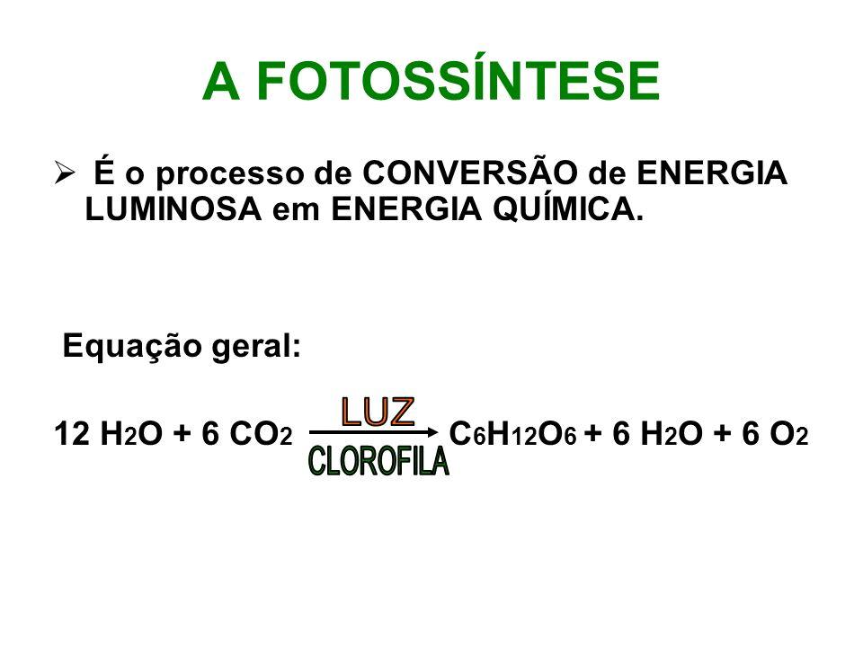 A FOTOSSÍNTESE É o processo de CONVERSÃO de ENERGIA LUMINOSA em ENERGIA QUÍMICA. Equação geral: