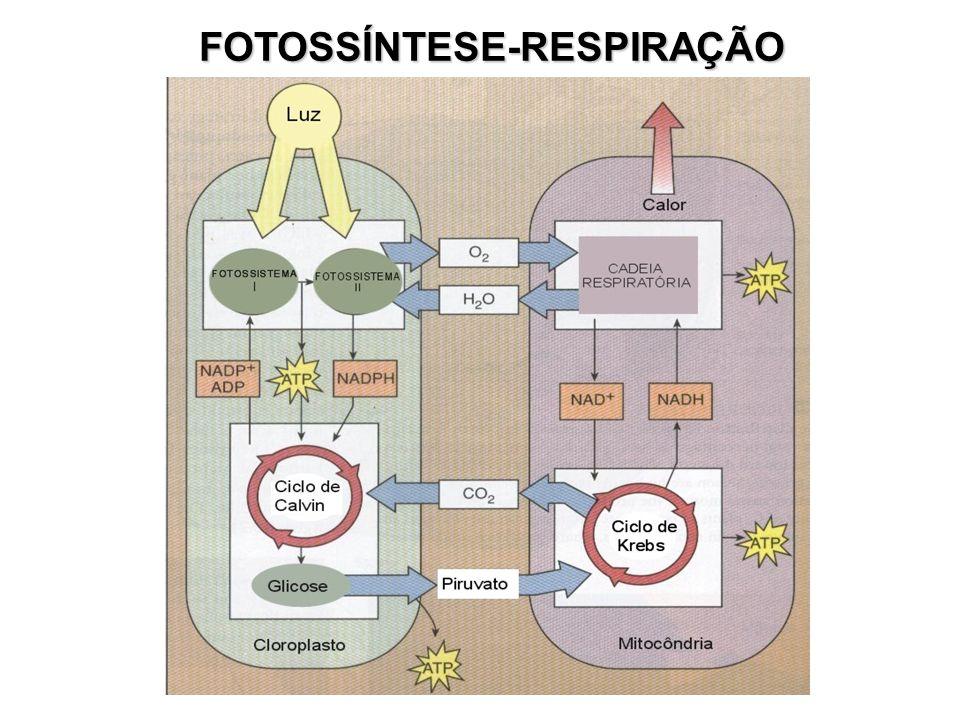 FOTOSSÍNTESE-RESPIRAÇÃO