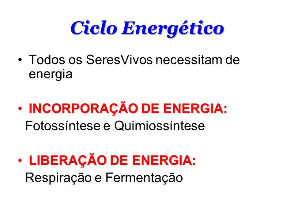 Ciclo Energético Todos os SeresVivos necessitam de energia