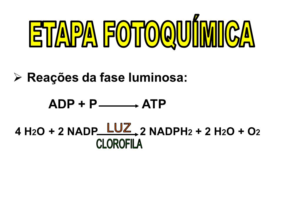 ETAPA FOTOQUÍMICA Reações da fase luminosa: ADP + P ATP