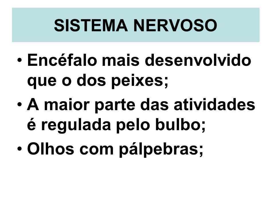 SISTEMA NERVOSO Encéfalo mais desenvolvido que o dos peixes; A maior parte das atividades é regulada pelo bulbo;