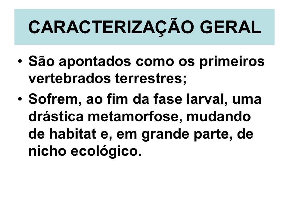CARACTERIZAÇÃO GERAL São apontados como os primeiros vertebrados terrestres;