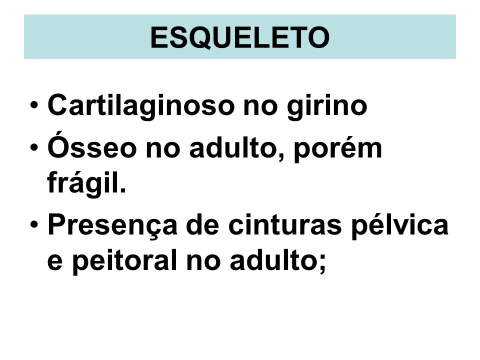 ESQUELETO Cartilaginoso no girino. Ósseo no adulto, porém frágil.