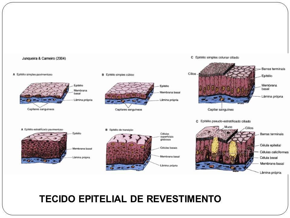 TECIDO EPITELIAL DE REVESTIMENTO