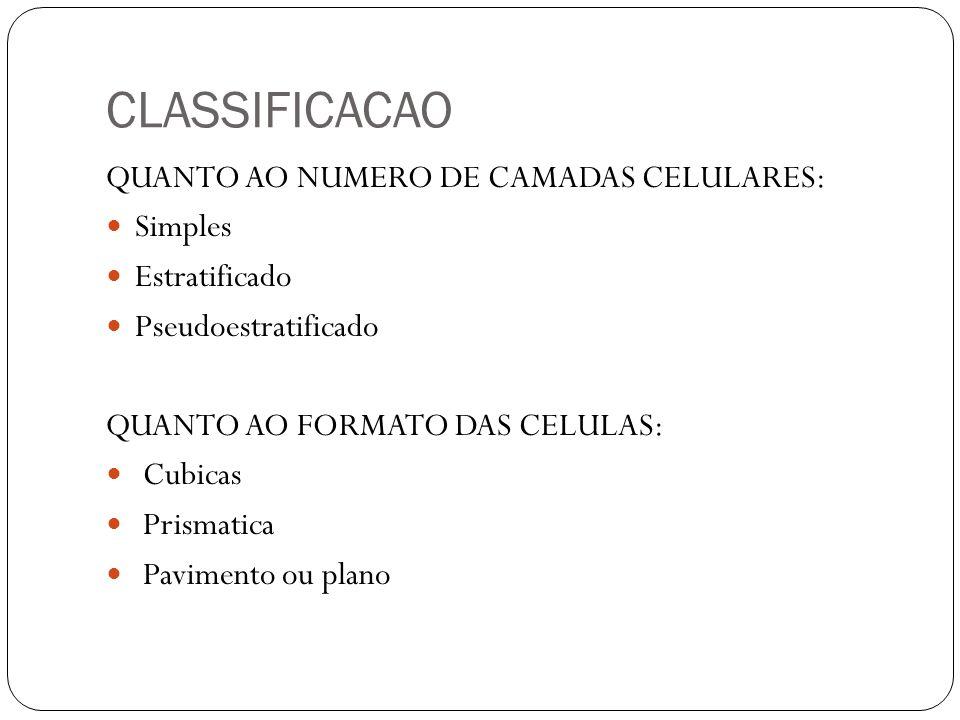 CLASSIFICACAO QUANTO AO NUMERO DE CAMADAS CELULARES: Simples