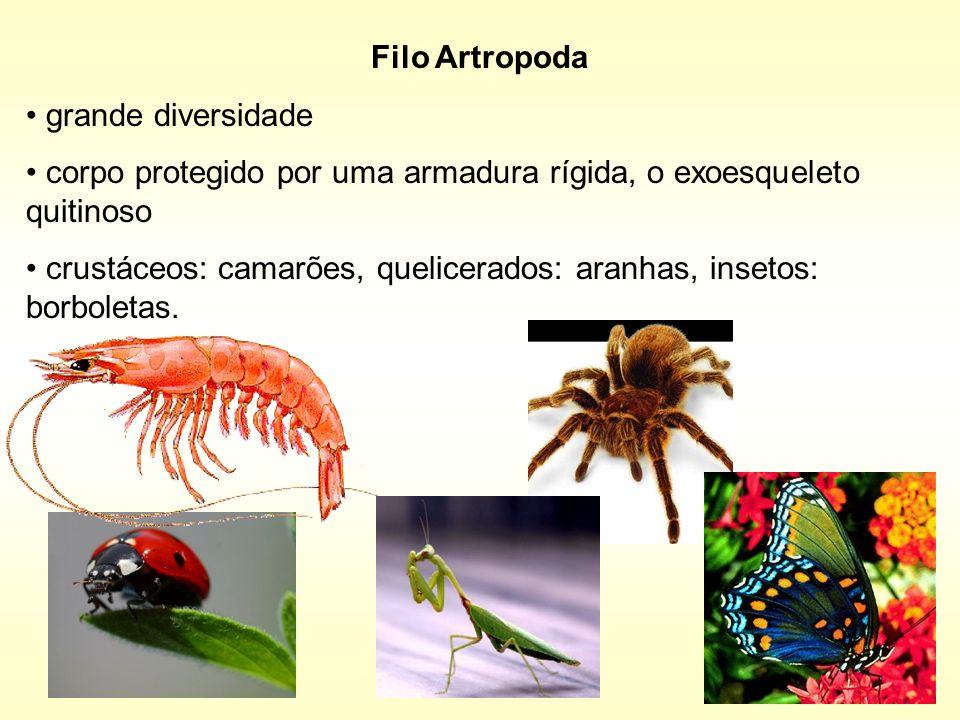 Filo Artropodagrande diversidade. corpo protegido por uma armadura rígida, o exoesqueleto quitinoso.