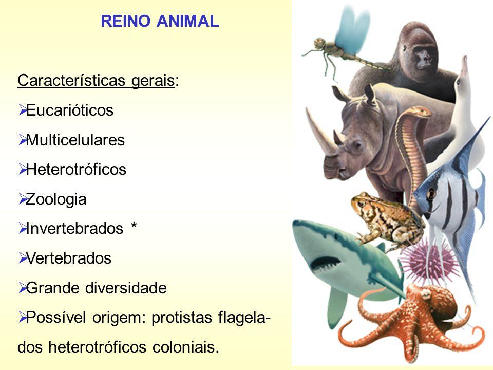 REINO ANIMAL Características gerais: Eucarióticos. Multicelulares. Heterotróficos. Zoologia. Invertebrados *