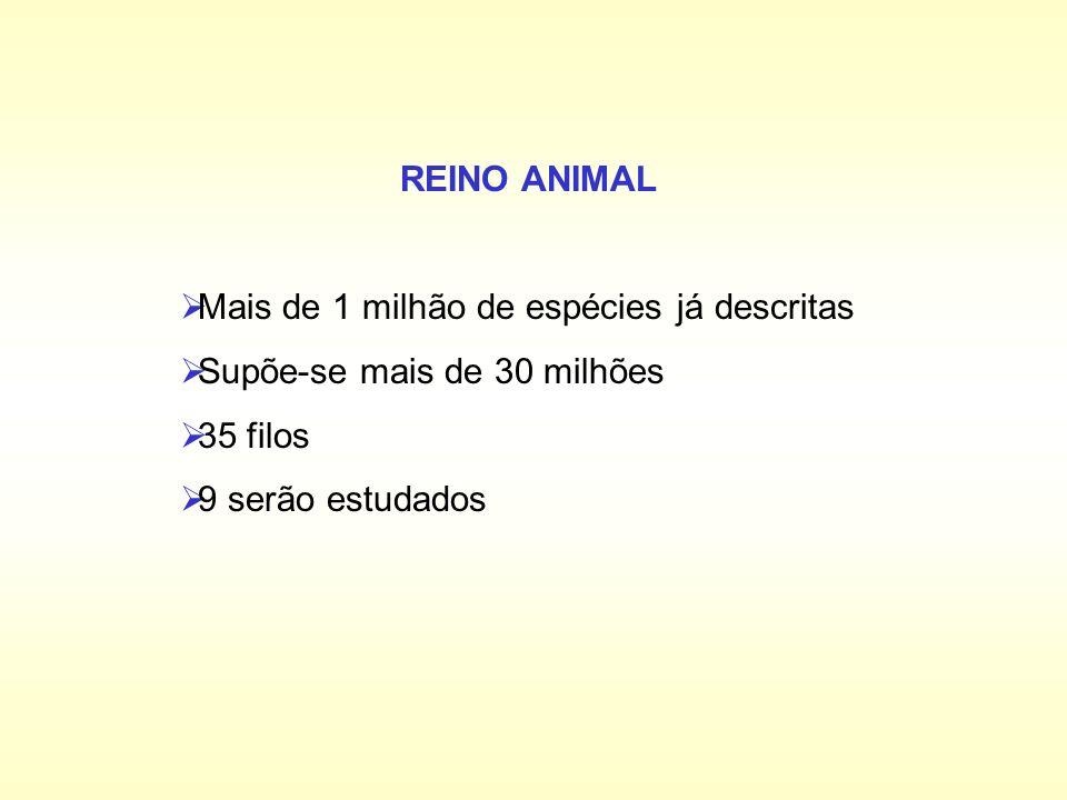 REINO ANIMAL Mais de 1 milhão de espécies já descritas.