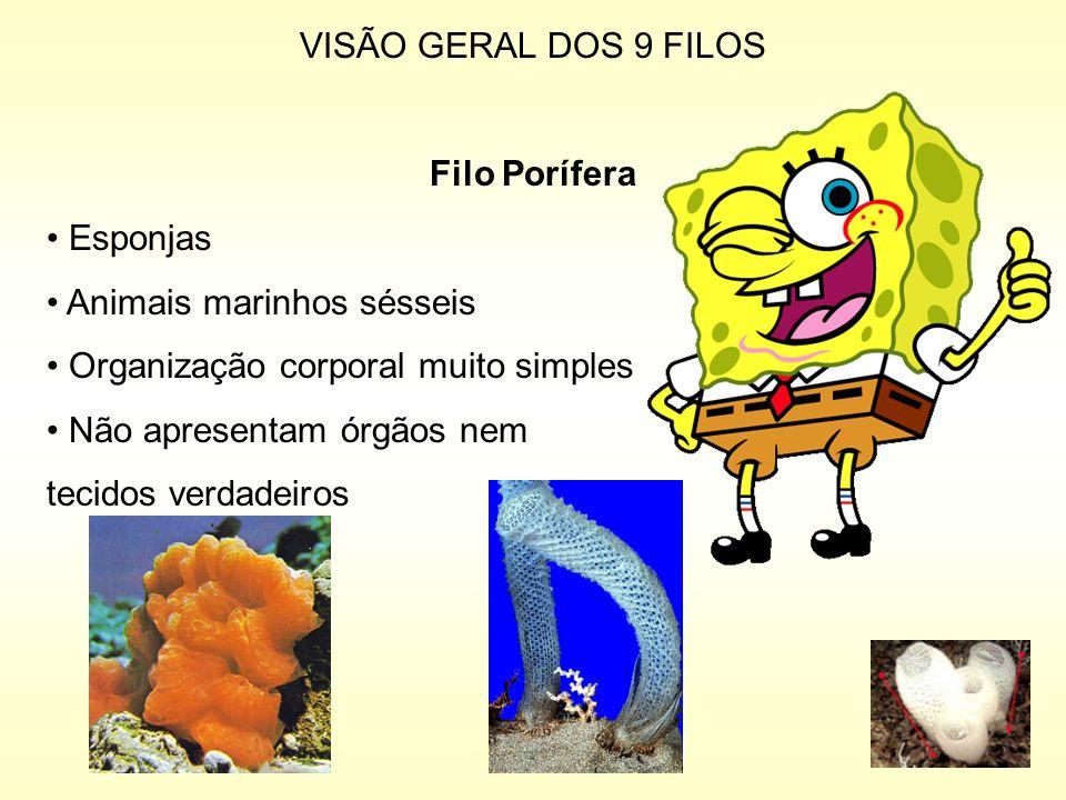 VISÃO GERAL DOS 9 FILOS Filo Porífera. Esponjas. Animais marinhos sésseis. Organização corporal muito simples.