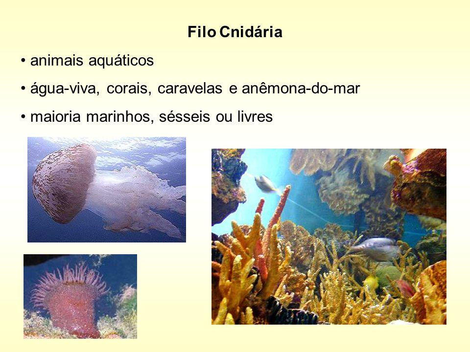 Filo Cnidária animais aquáticos. água-viva, corais, caravelas e anêmona-do-mar.