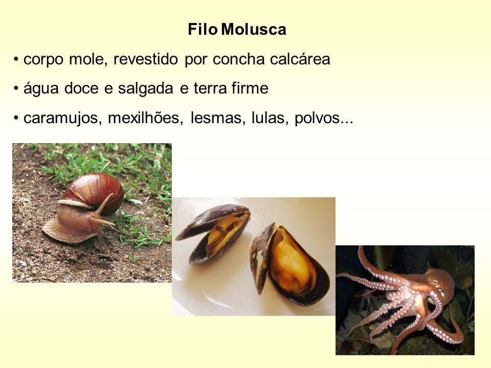 Filo Molusca corpo mole, revestido por concha calcárea.