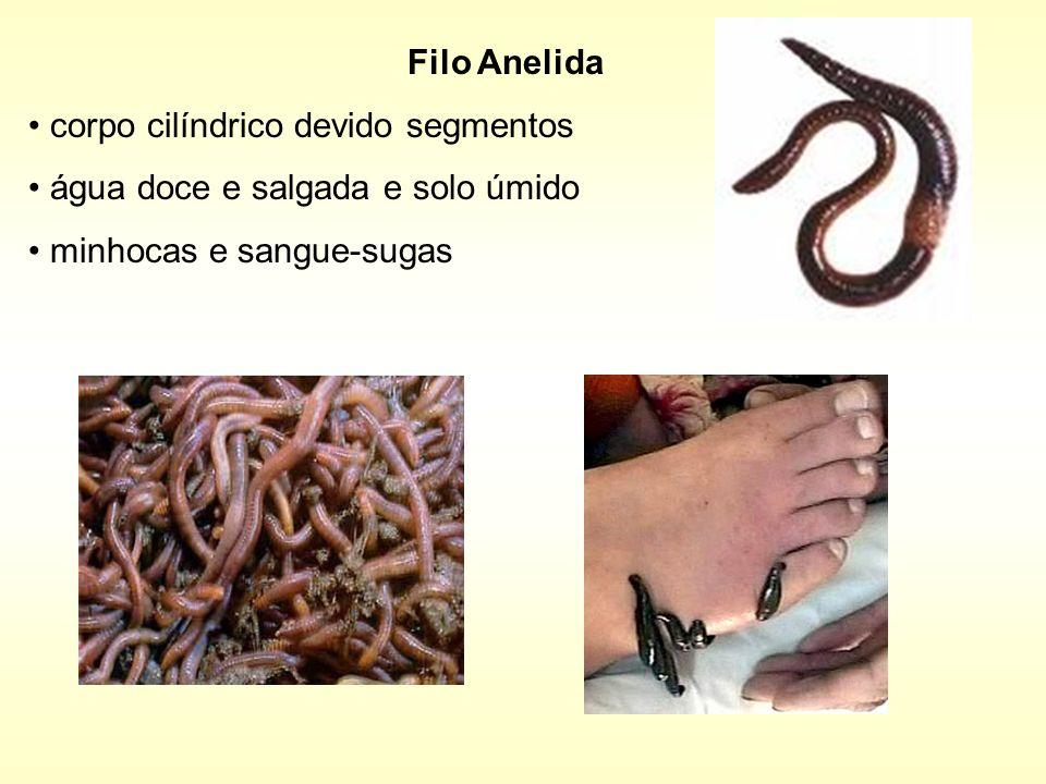 Filo Anelidacorpo cilíndrico devido segmentos.água doce e salgada e solo úmido.