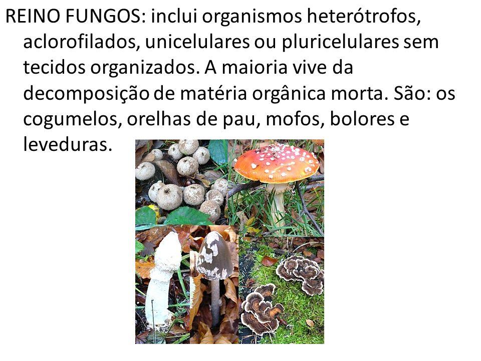 REINO FUNGOS: inclui organismos heterótrofos, aclorofilados, unicelulares ou pluricelulares sem tecidos organizados.