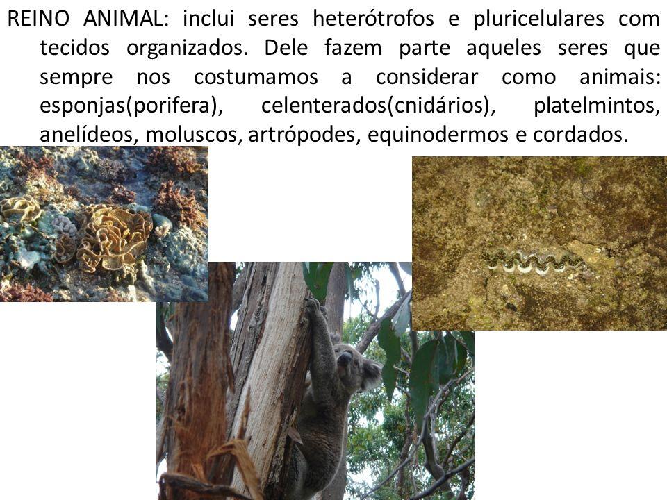 REINO ANIMAL: inclui seres heterótrofos e pluricelulares com tecidos organizados.