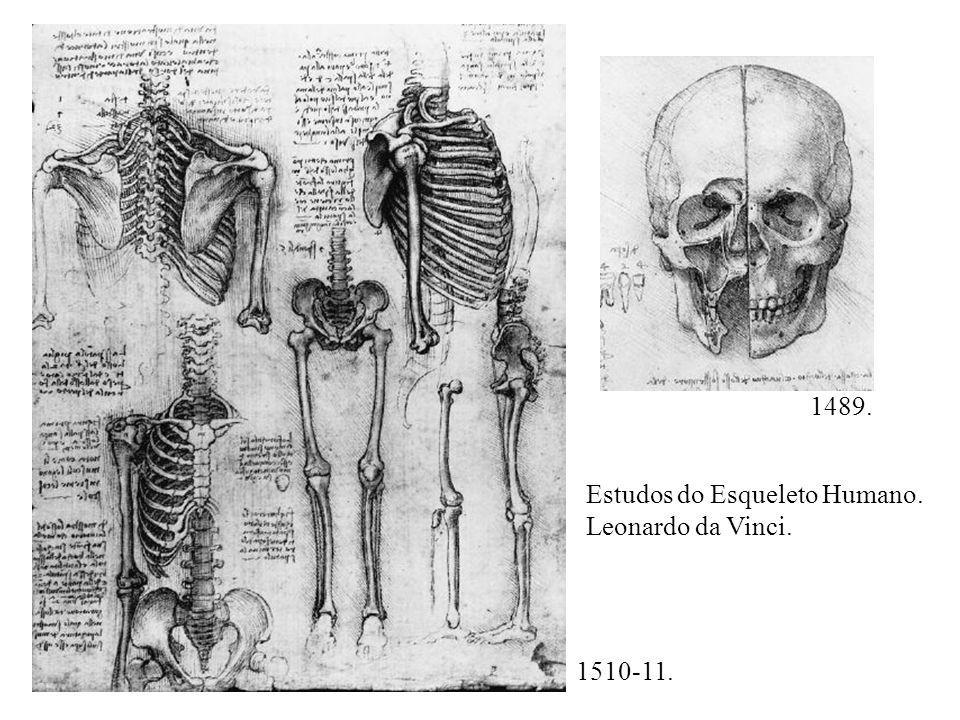 1489. Estudos do Esqueleto Humano. Leonardo da Vinci. 1510-11.