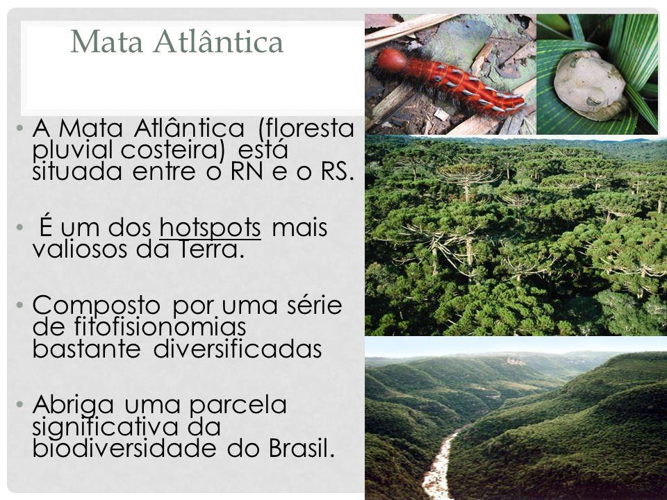 Mata Atlântica A Mata Atlântica (floresta pluvial costeira) está situada entre o RN e o RS. É um dos hotspots mais valiosos da Terra.