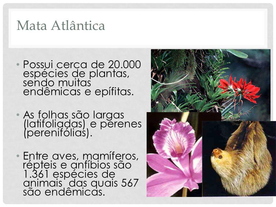Mata AtlânticaPossui cerca de 20.000 espécies de plantas, sendo muitas endêmicas e epífitas.