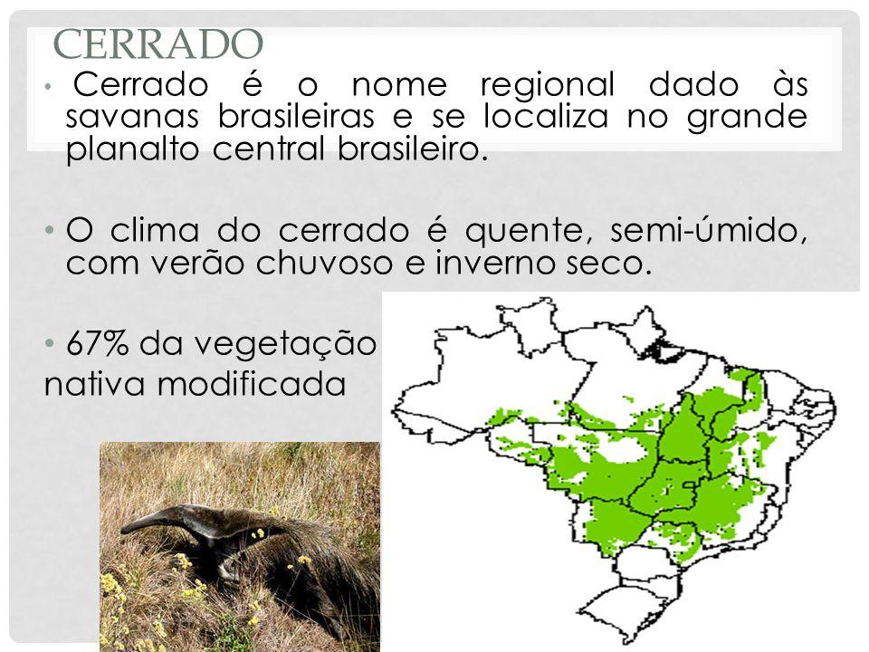 Cerrado Cerrado é o nome regional dado às savanas brasileiras e se localiza no grande planalto central brasileiro.