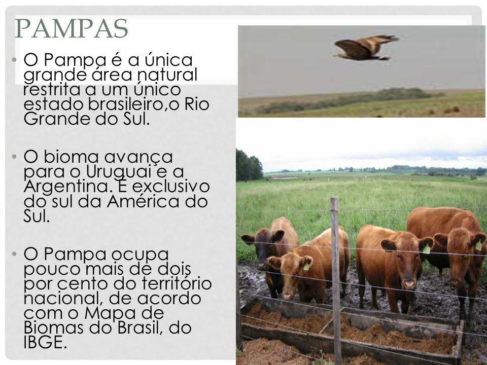 PampasO Pampa é a única grande área natural restrita a um único estado brasileiro,o Rio Grande do Sul.