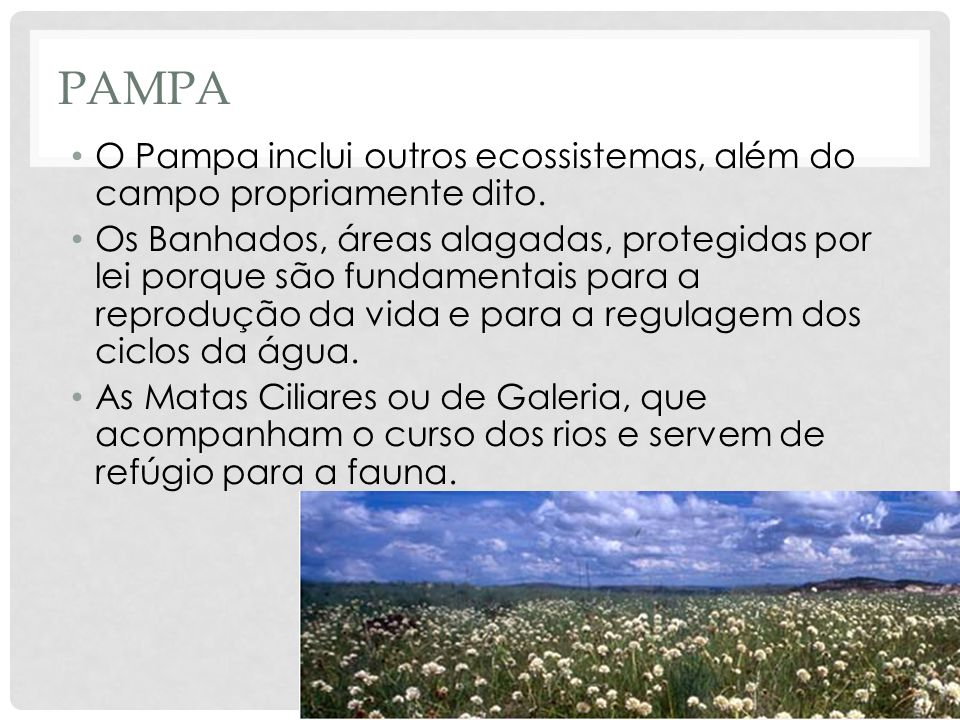 Pampa O Pampa inclui outros ecossistemas, além do campo propriamente dito.