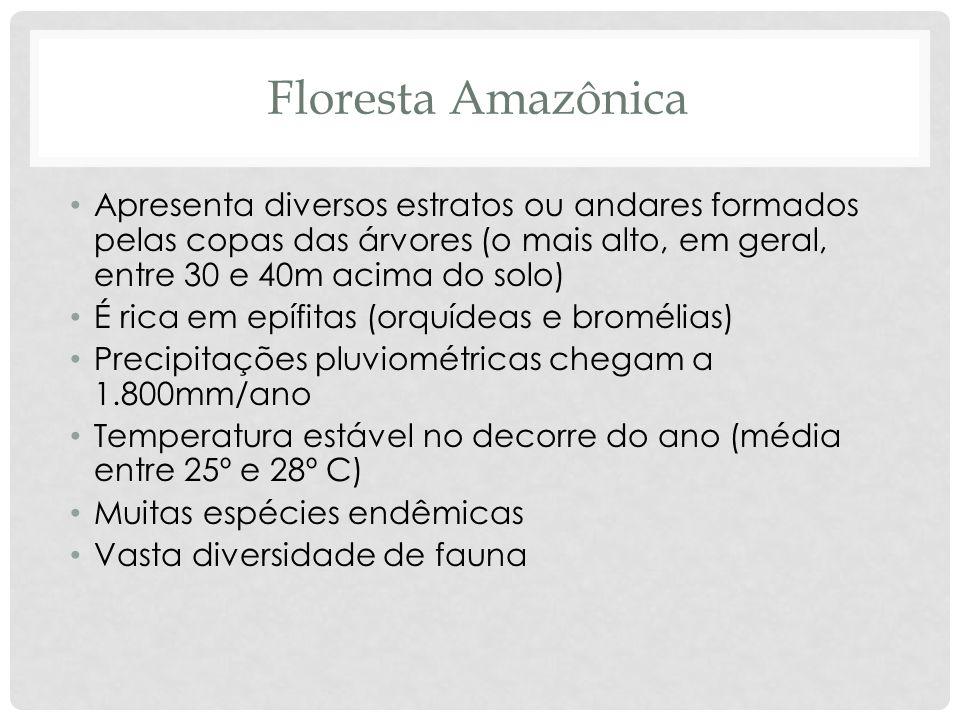 Floresta AmazônicaApresenta diversos estratos ou andares formados pelas copas das árvores (o mais alto, em geral, entre 30 e 40m acima do solo)