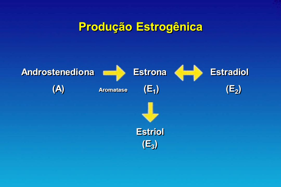 Produção Estrogênica Androstenediona Estrona Estradiol