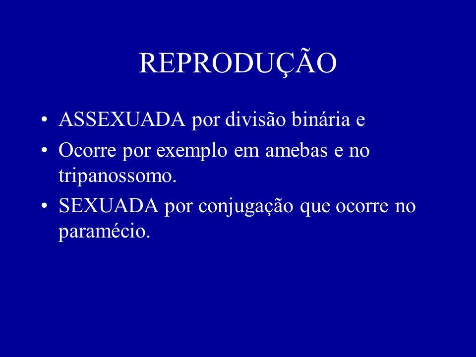 REPRODUÇÃO ASSEXUADA por divisão binária e
